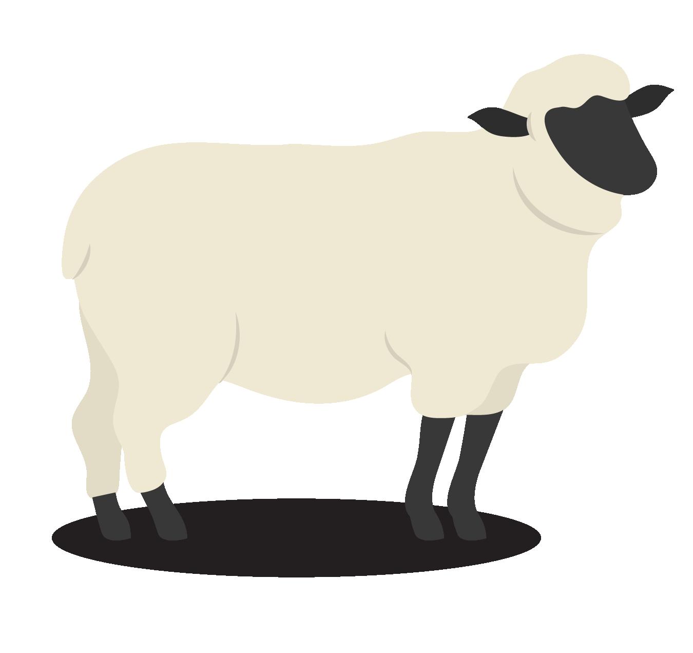 mouton-aid-inonésie-01